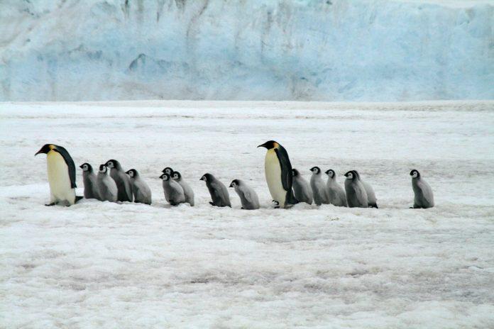 unde-traiesc-pinguinii